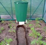 Pasodinti pomidorai